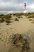 Coubre lighthouse peninsula of Arvert Charente France ; height 65 m