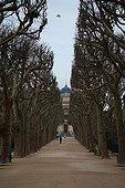 Avenue of plane trees in winter Jardin des Plantes Paris ;
