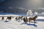 Horse drawn sleigh racing in Rottach-Egern Upper Bavaria Germany