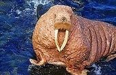 Pacific walrus (Odobenus rosmarus divergens), portrait, Bering Sea, Alaska