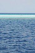 Sandbank in the Indian Ocean in the Maldives