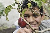 Teenager being delighted about a ripe Tamarillo fruit (Solanum betaceum), He is being trained in horticulture as part of an urban agricultural project, slums of Cerro Norte, Bogotá, Columbia