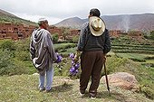 Residents of Hlaout village inspecting and picking German Irises (Iris germanica) in the terraced fields belonging to the village cooperative, organic growth of crops for natural cosmetics in Europe, Ait Inzel Gebel region, Atlas Mountains, Morocco, Africa
