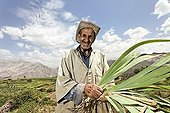 An elderly resident of the village of Iwasoudane harvesting the rhizomes of organically grown Irises (Iris germanica) for natural cosmetics in Europe, Ait Inzel Gebel Region, Atlas Mountains, Morocco, Africa