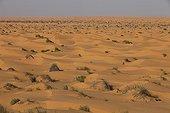 Début du Grand Erg Oriental Tunisie