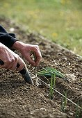 Planning out of leeks in a kitchen garden