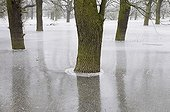 Frozen floodwater in the Middle Elbe Biosphere Reserve, Dessau, Saxony-Anhalt, Germany, Europe