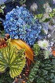 Autumn floral composition in a garden