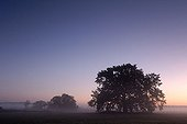 Morning mist and solitary oaks in the Middle Elbe Biosphere Reserve, Saxony Anhalt, Germany, Europe
