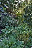 Bear's breech and euphorbia in a garden ; Landscaper: David Frendo
