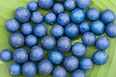 Cherry fruit harvested blue in New Caledonia
