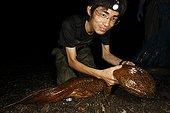 Observation d'une Salamandre géante du Japon Ile d'Honshu ; A la suite de l'introduction de la Salamandre géante de Chine dans les années 50, il y a eu un phénomène d'hybridation. Les scientifiques travaillent sur ce phénomène et des prélèvement de tissus suivies d'analyses ADN permettront de déterminer s'il y a eu hybridation.