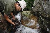 Chercheur capturant des Salamandre géante du Japon ; Le professeur Sumio Okada s'est intéressé à l'existence des différentes classes d'âges dans un même cours d'eau et tente de comprendre quels sont les critères qui font d'un cours d'eau un lieu favorable à la reproduction et au développement des salamandres. Grâce à la télémétrie les mouvements des animaux sont consignés et analysés.