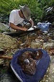 Capture d'une Salamandre géante du Japon en rivière ; Le professeur Sumio Okada s'est intéressé à l'existence des différentes classes d'âges dans un même cours d'eau et tente de comprendre quels sont les critères qui font d'un cours d'eau un lieu favorable à la reproduction et au développement des salamandres. Grâce à la télémétrie les mouvements des animaux sont consignés et analysés.