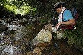 Recherche de Salamandre géante du Japon dans la rivière ; Le chercheur Sumio Okada s'est intéressé à l'existence des différentes classes d'âges dans un même cours d'eau et tente de comprendre quels sont les critères qui font d'un cours d'eau un lieu favorable à la reproduction et au développement des salamandres. Grâce à la télémétrie les mouvements des animaux sont consignés et analysés.