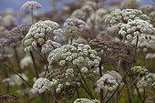 Woodland angelic flowers