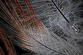 Feather Red-bellied Woodpecker ; Lighting in black, 20 x Canon EOS 450D 12 million pixels.