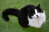 Chat noir et blanc à poil long assis sur de l'eau gelée