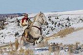 Cowboy on his prancing Quarter Hose Wyoming USA ; Cowboy : Tom Bercher
