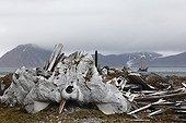 Squelette de Baleine sur la côte du Spitzberg ; L'industrie baleinière qui a battu son plein au début du XXième siècle a laissé nombre de cimetières de baleines.