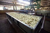 Passage of baked shredded latex Cambodia ; treatment plant until the latex of rubber ball destined for export.