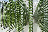 Microalgae production plant in Germany ; Roquette company