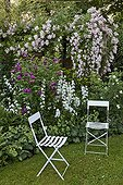 Chairs with rose-trees and bellflowers in bloom in a garden ; Rose-tree 'Eléonor Berkeley'<br>Rose-tree 'Hippolyte'