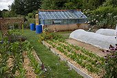 Straw mulch over endives and greenhouse in a kitchen garden