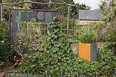 Tall morning glory and decoration in a kitchen garden
