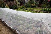 Veil over cabbages in an organic kitchen garden