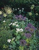 Ornament garlics and alpine lady's mantle in a garden ; Designer: Pierre-Alexandre RISSER
