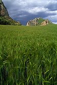 Field of barley and limestone cliffs Catalonia Spain
