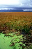 Rice field in the storm Catalonia Ebro Delta Spain