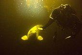 Beluga and Diver White Sea Karelia Russia