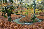 Stream in the woods at Gorbeia NP in autumn Spain