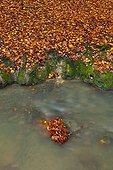 Dead leaves in a stream at Gorbeia NP in autumn Spain