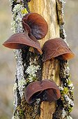 Fungi on dead wood in spring France