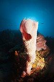 Caribbean Coral Reef Caribbean Sea Dominica