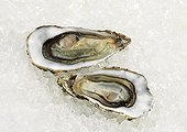 Marennes d'Oléron oysters on ice