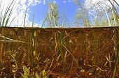 Over-under shot a pond prairie Fouzon France