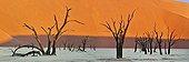 Dead Vlei Sossusvlei Namib Desert Namibia]