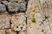 Wall of Megalithic Temples of Ggantija Malta Gozo