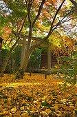 Renge-ji temple garden in autumn  Japon