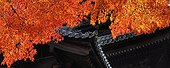 Nanzen-ji temple roof and maples in autumn  Japon