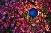 Maple leaves in Shozan garden in autumn  Japon