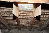 Development of access to bat in an atticFrance ; Rafael Quesada, specialist bats