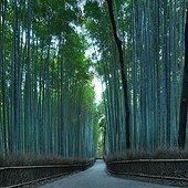 Arashiyamain bamboo forest in autumn  Japon