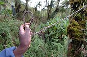 Rope snare to catch antelopes but which can kill Gorilla