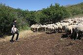 Rachida Dati and sheep France