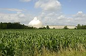 Sugar fabric of Erstein and Corn fields Alsace France